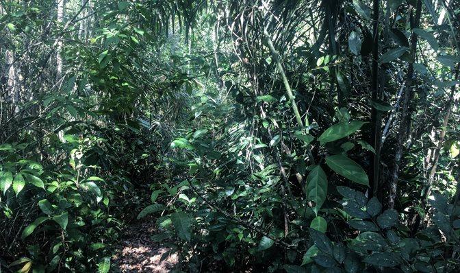 Latam Compact Amazonia 2019